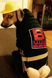 dog plumber